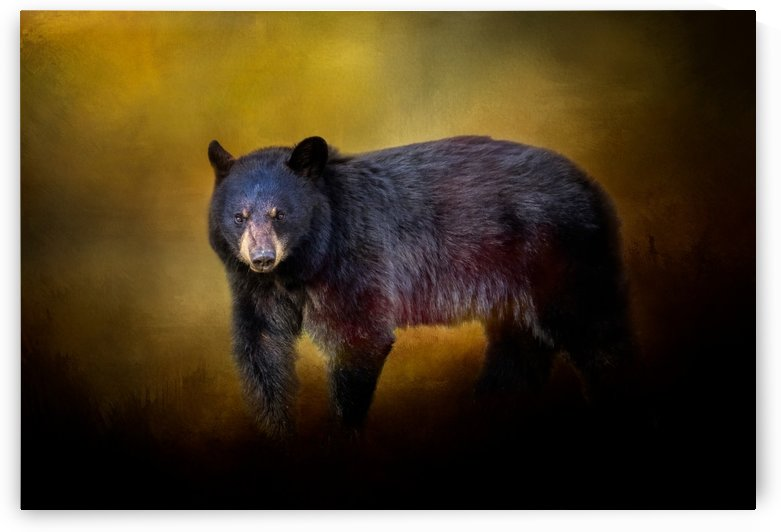 Bear by Michel Soucy