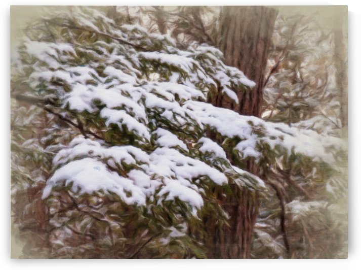 Snowy Pine Boughs by Leslie Montgomery