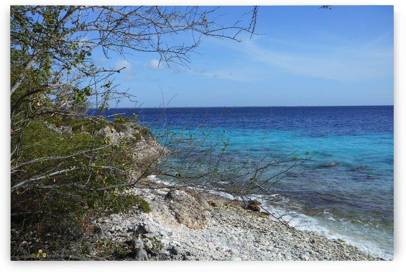 Bonaire Beach Scape by Michael Brown
