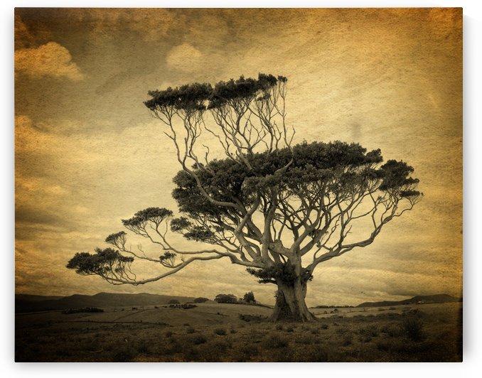 Windswept tree mono by Downundershooter