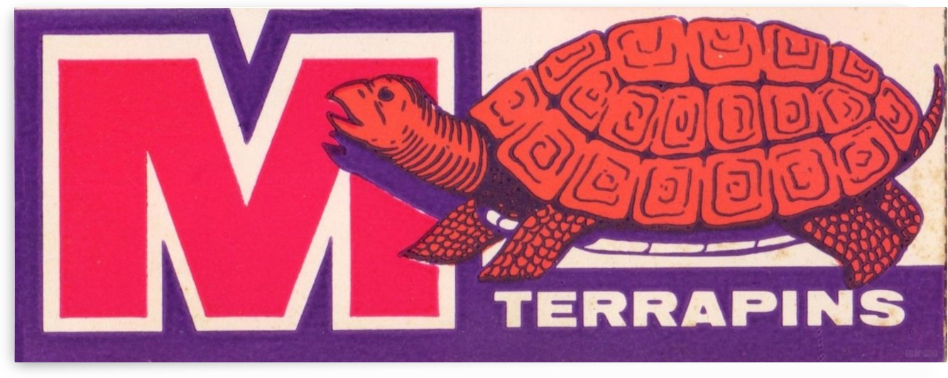 1957 Maryland Terrapin Art Reproduction by Row One Brand