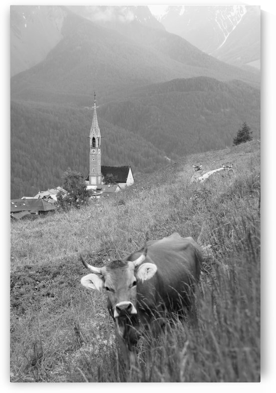Swiss Brown Cow with Horns with Church of Sent in the Background III by Swiss Art by Patrick Kobler