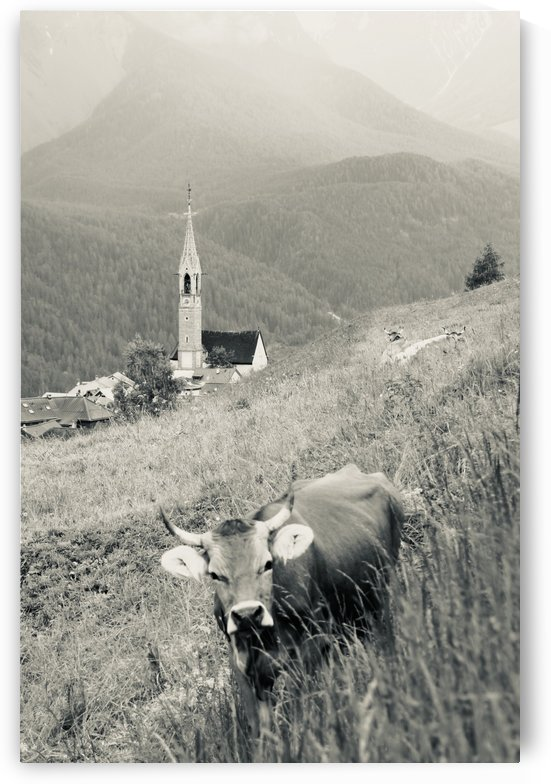 Swiss Brown Cow with Horns with Church of Sent in the Background IV by Swiss Art by Patrick Kobler