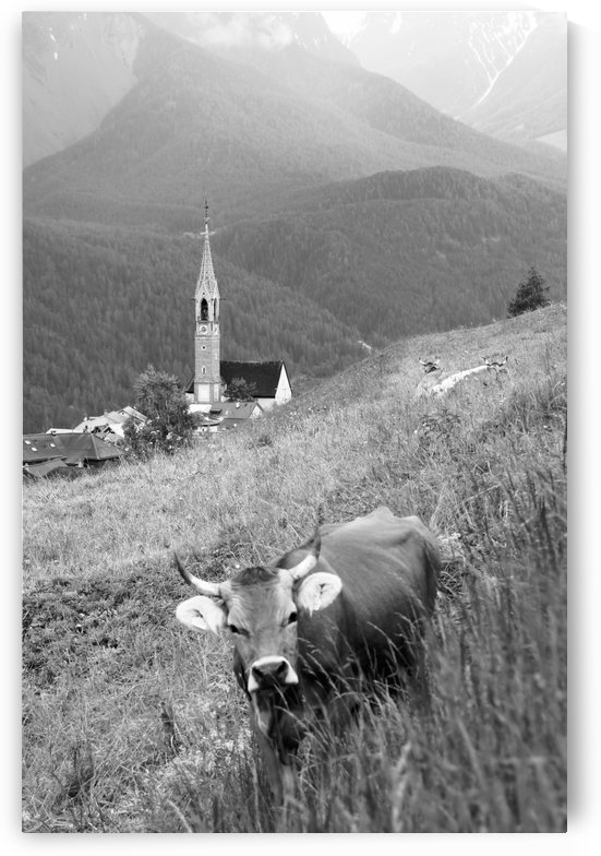 Swiss Brown Cow with Horns with Church of Sent in the Background V by Swiss Art by Patrick Kobler
