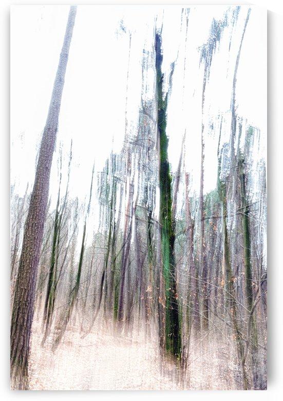 Woodland by Luigi Girola