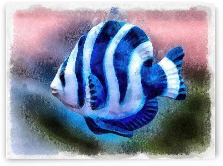 A Single Angel Fish by Leslie Montgomery