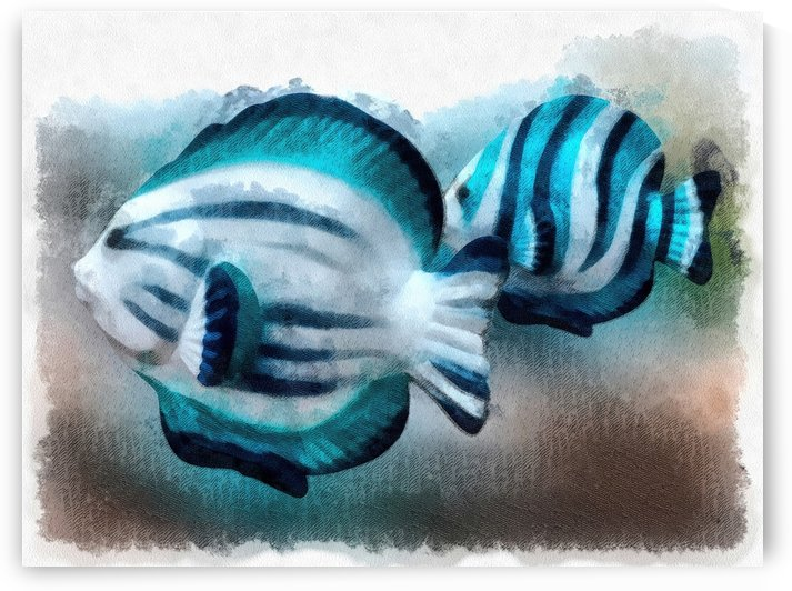 A Pair Of Angel Fish by Leslie Montgomery