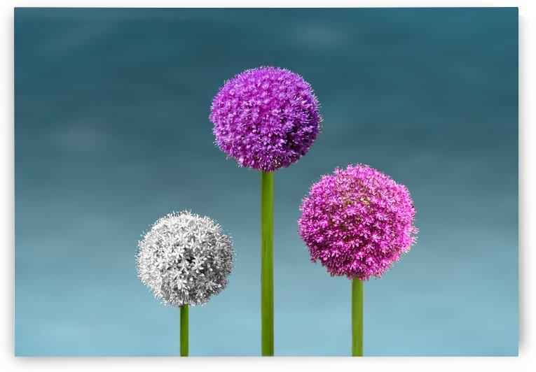 Round Flowers.  by Radiy Bohem