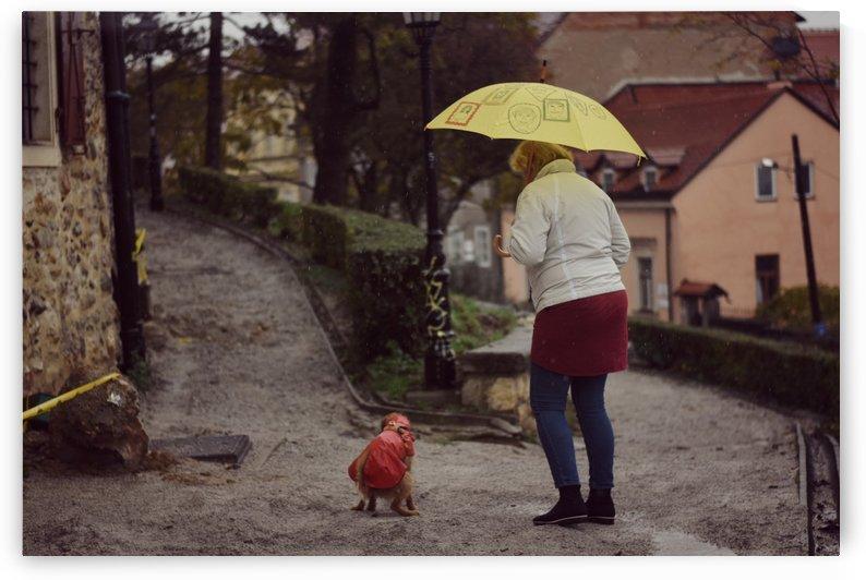 Rainy day by Alen Gurovic