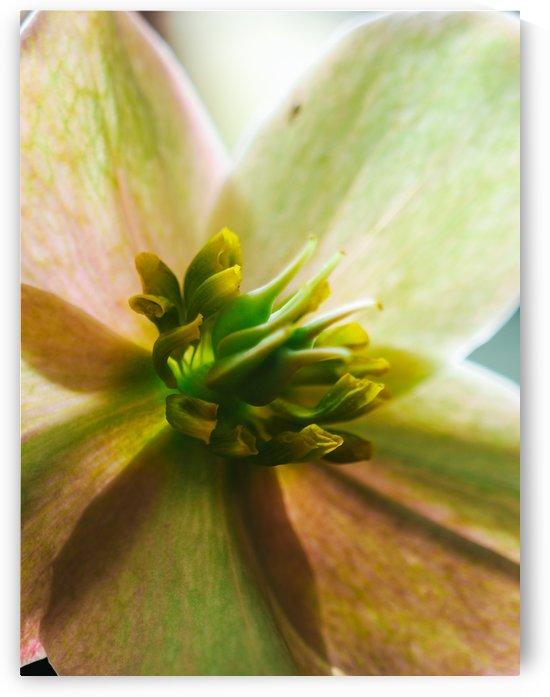 Macro Flower 3 by Victor F Rodriguez Jr