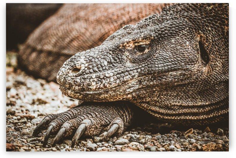 The Komodo Dragon  by Sebastian Dietl