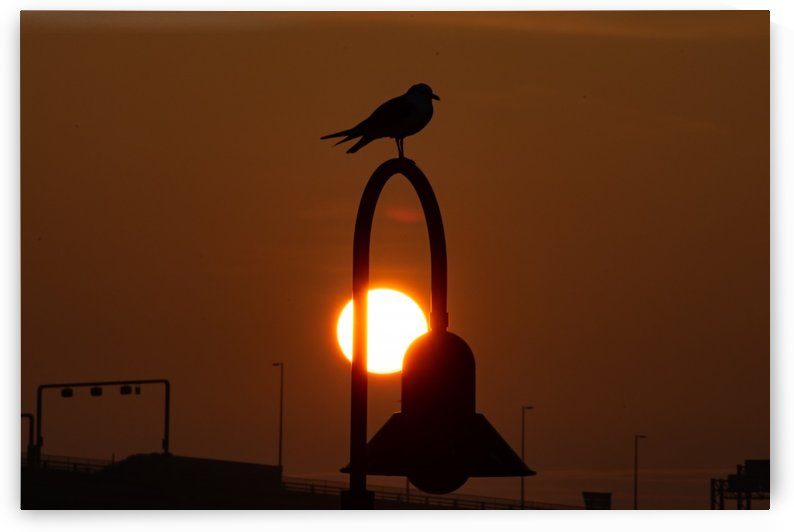 Seagull on the Sun by Cameraman Klein