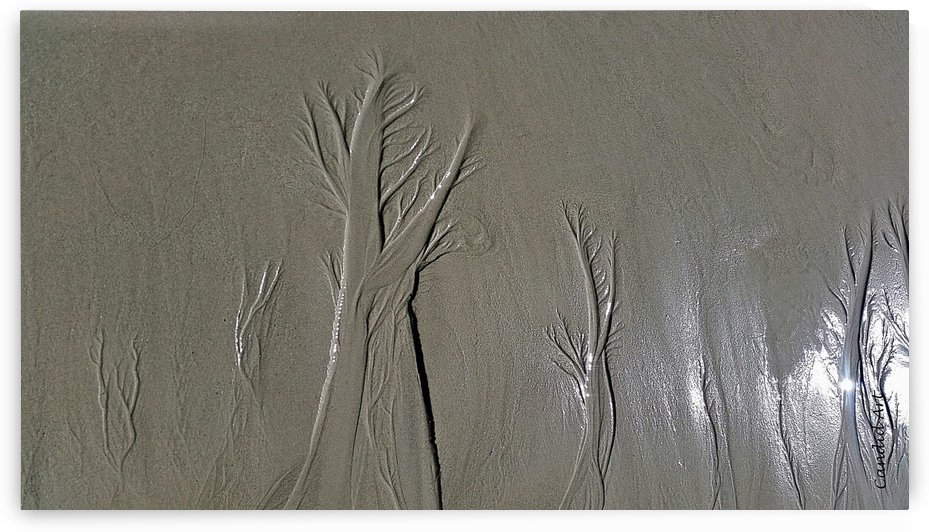 Trees in the sand 1 by Candid Art