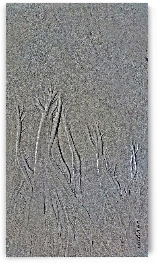 Trees in the sand 2 by Candid Art