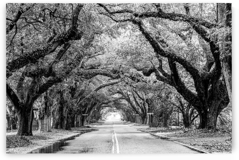 South Boundary Street   Aiken 4178 by @ThePhotourist