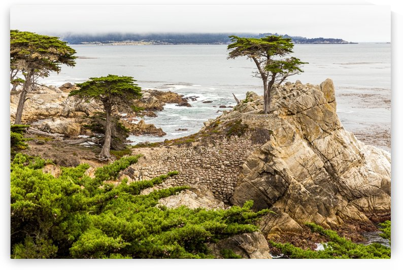 Lone Cypress at Pebble Beach 1513 by @ThePhotourist