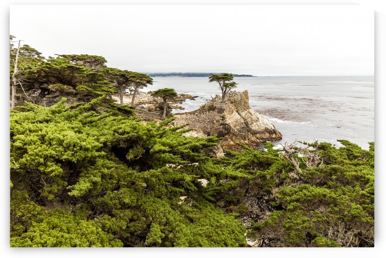 Lone Cypress at Pebble Beach 1510 by @ThePhotourist