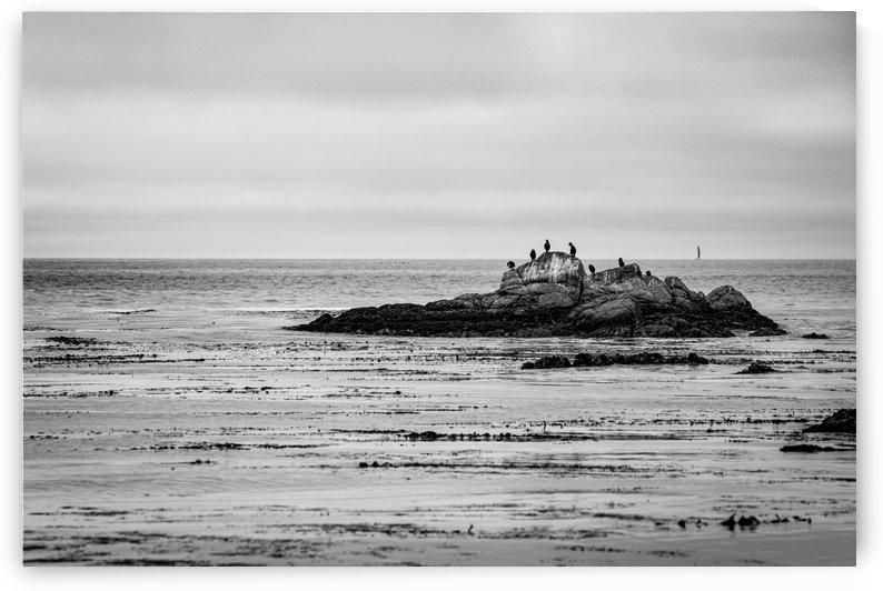 Monterey Peninsula 1399 by @ThePhotourist