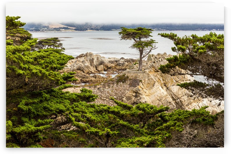 Lone Cypress at Pebble Beach 1500 by @ThePhotourist
