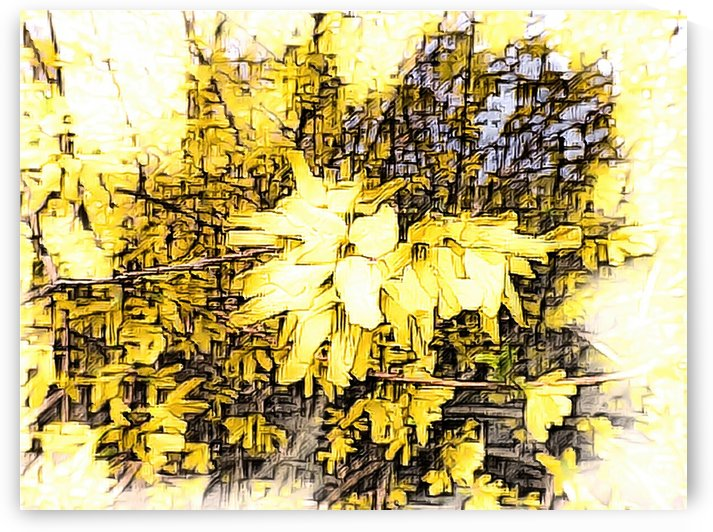 Bright Forsythia Branch by Leslie Montgomery
