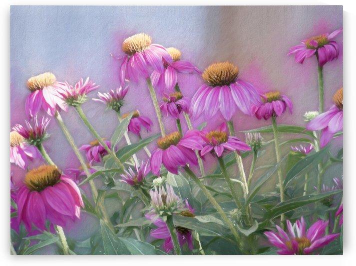 Brilliant Wild Berry Cone Flower by Leslie Montgomery
