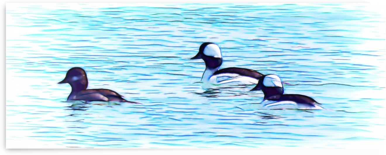 Buffleheads by Leslie Montgomery