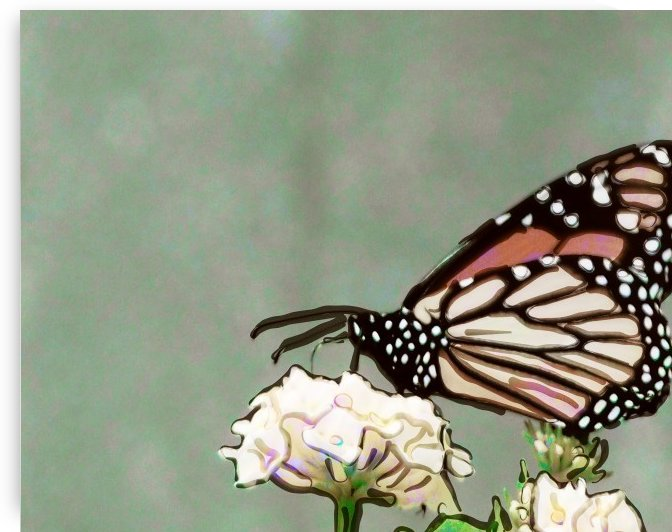 Butterfly Kisses by Leslie Montgomery
