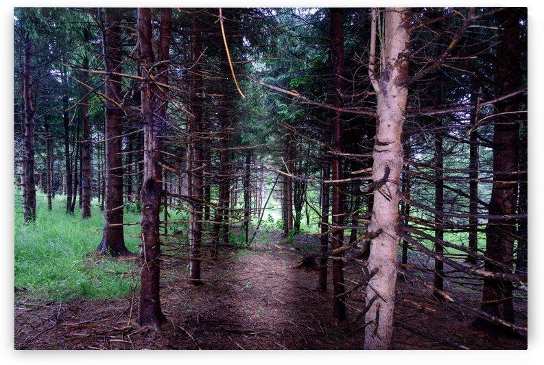 Pine tree trunks by RezieMart