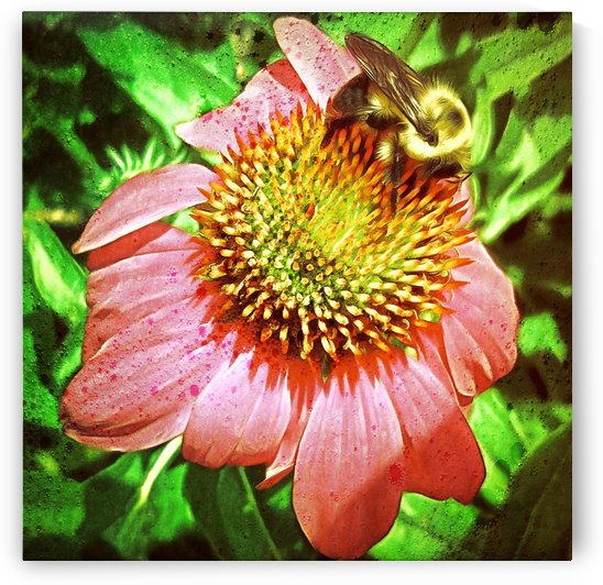 Echinacea And Bee by Leslie Montgomery