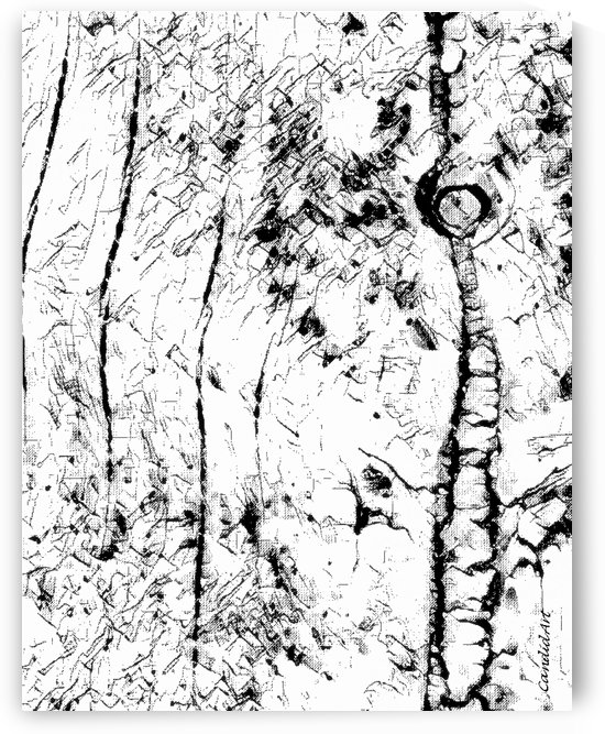 Black & White Texture Nature by Candid Art