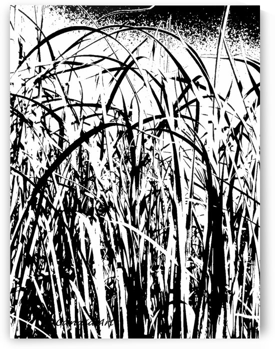 Black & White Nature Texture by Candid Art