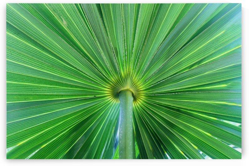 Leafy Green by Gods Eye Candy