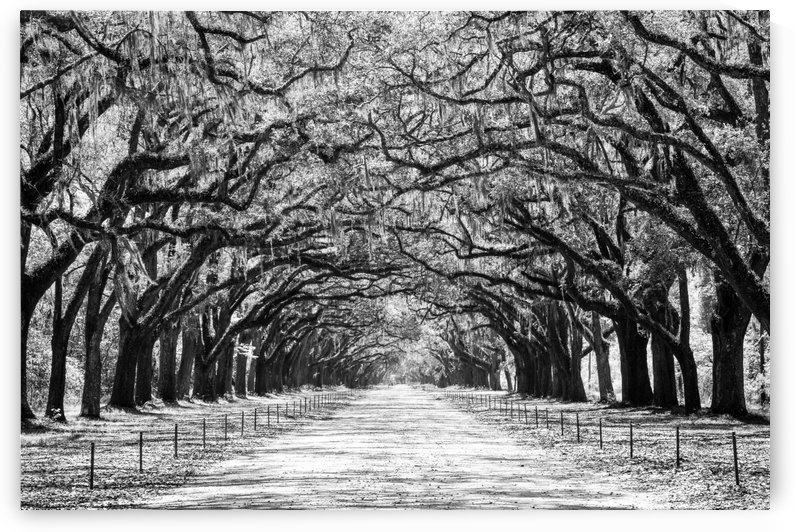 Wormsloe Plantation   Savannah 04420 by @ThePhotourist