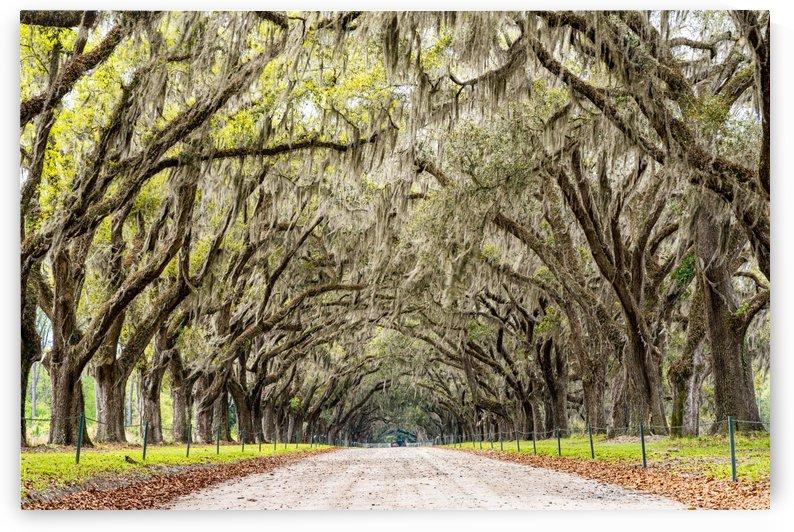 Wormsloe Plantation   Savannah 03999 by @ThePhotourist