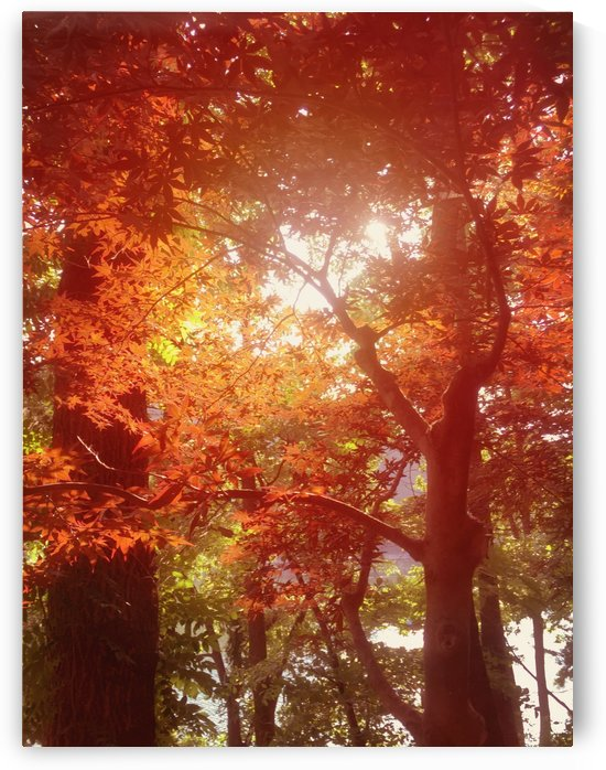 Autumn Leaves by C  McGowen