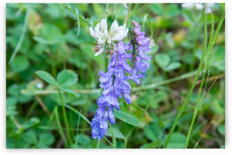 Wild purple flower by RezieMart