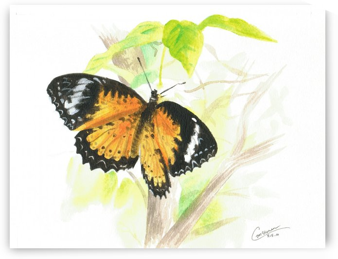 Butterfly by C  McGowen