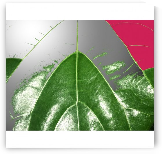 Green leaf with pink abstract by BotanicalArt ca