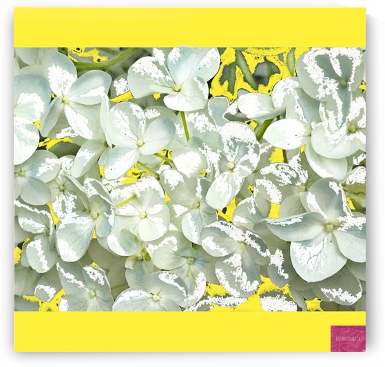 Hydrangea Yellow Composition by BotanicalArt ca
