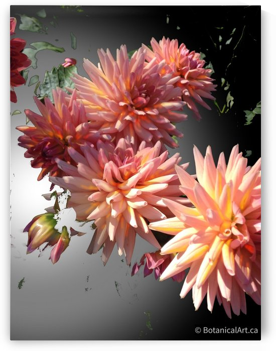 Floating Chrysanthemums by BotanicalArt ca