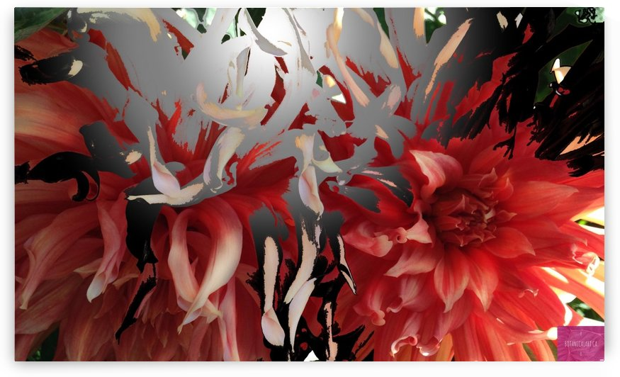 Chrysanthemum Burst 2 by BotanicalArt ca