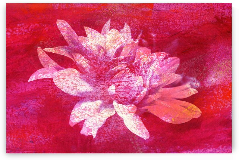 Modern Pink Dahlia by Joy Watson