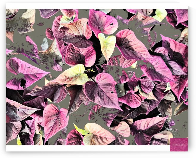 Pinky Petals by BotanicalArt ca