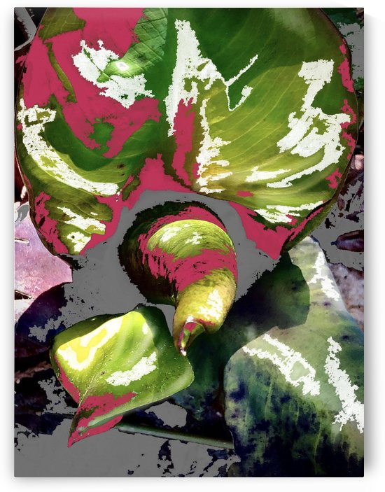 Skunk Cabbage Abstract by BotanicalArt ca