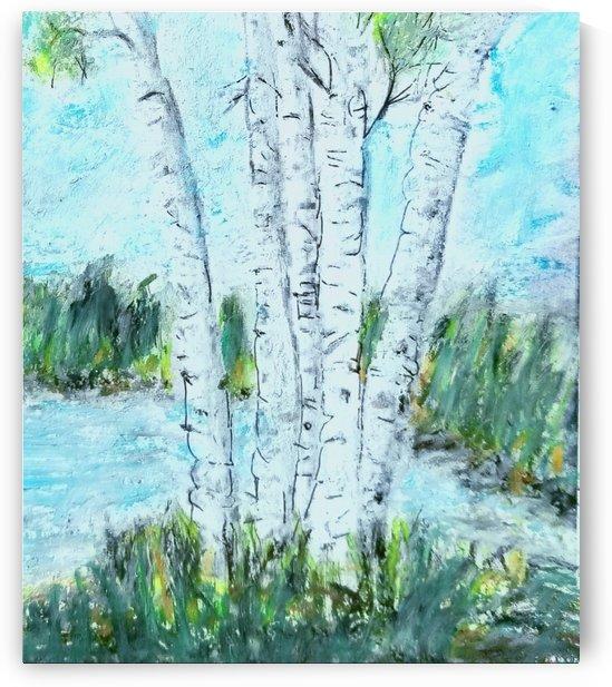5 Birch Trees by djjf