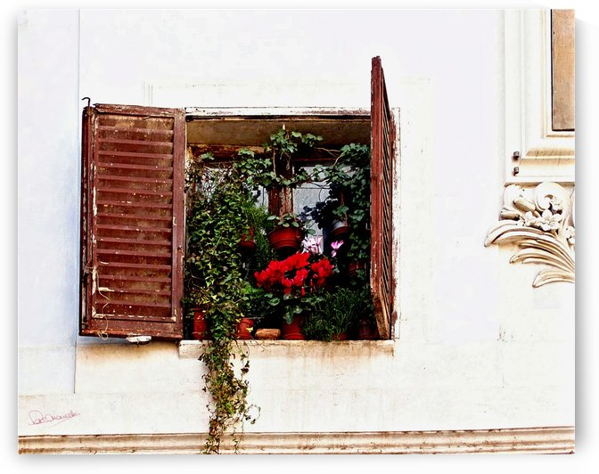 Roman Window Garden by Shadow and Form