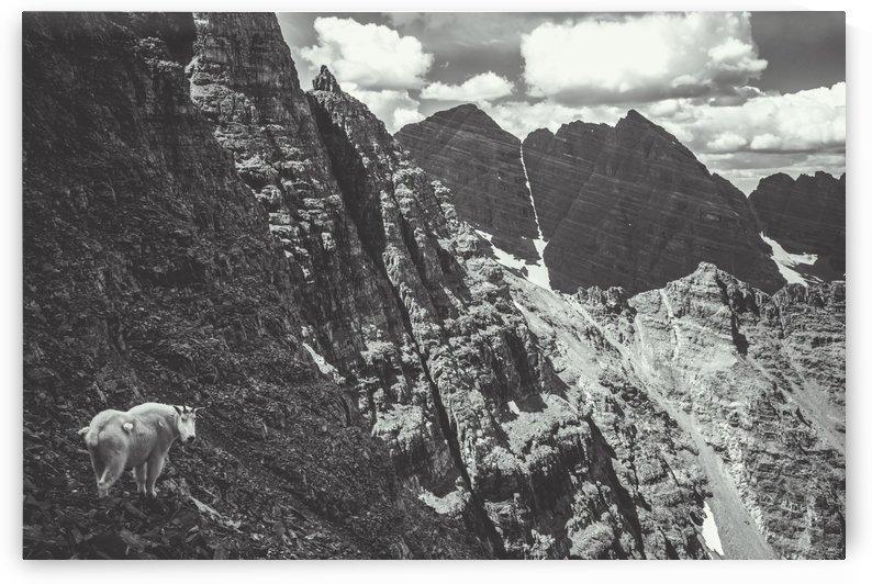 Pyramid Peak Mountain Goat by Sebastian Dietl