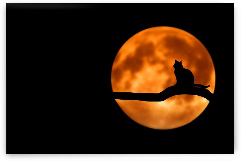 tree cat silhouette moon full moon by Shamudy