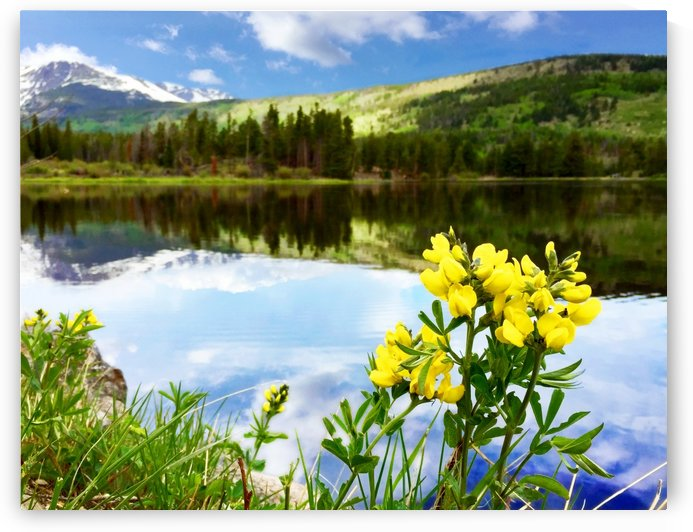 Flowers by the Bear Lake by C  McGowen
