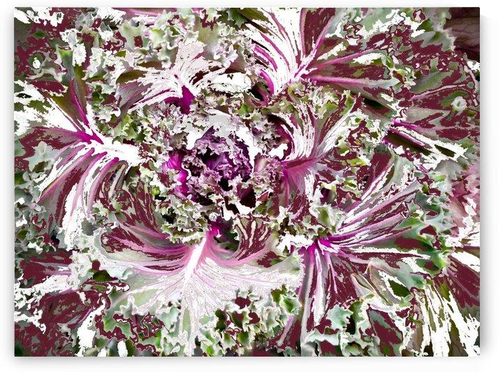 Cabbage Decor by BotanicalArt ca